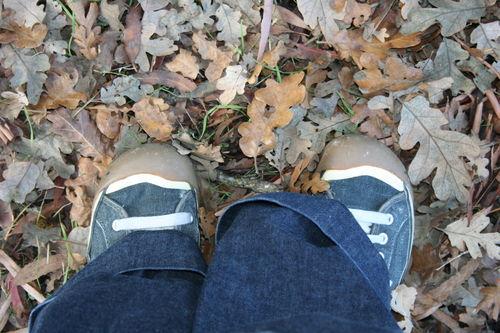 Shoes in oak leaves