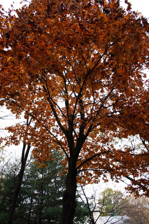 Fall leaves 2