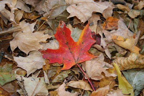October walk 4
