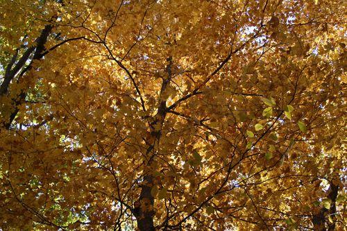October walk 5