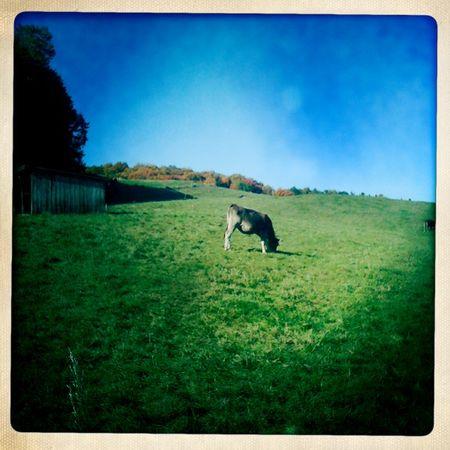 Farm walk 1