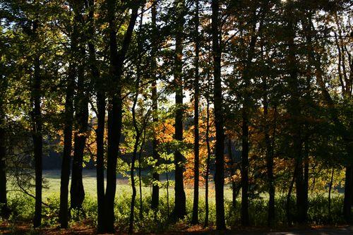October walk 10