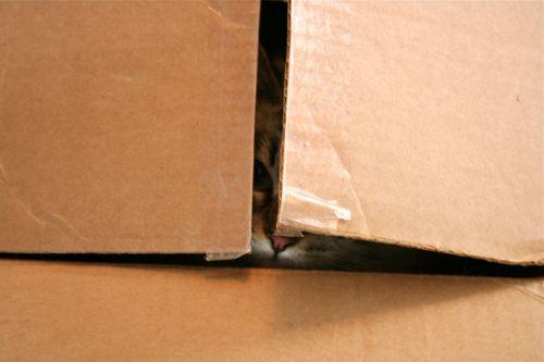 Snowball in a box 2