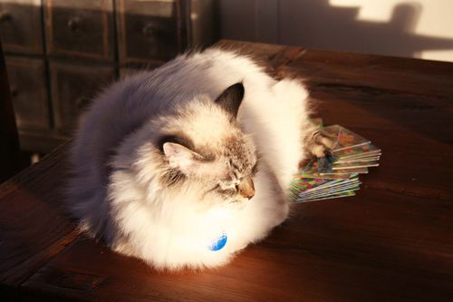 Snowball in the sunshine